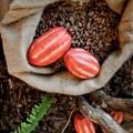Kirchenkreis leistet Aufklärungsarbeit für Fair-Trade-Schokolade